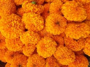 Marigold Garlands